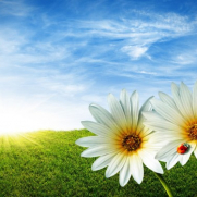 Flower-Wallpaper - Copie
